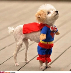 superman-dog.jpg